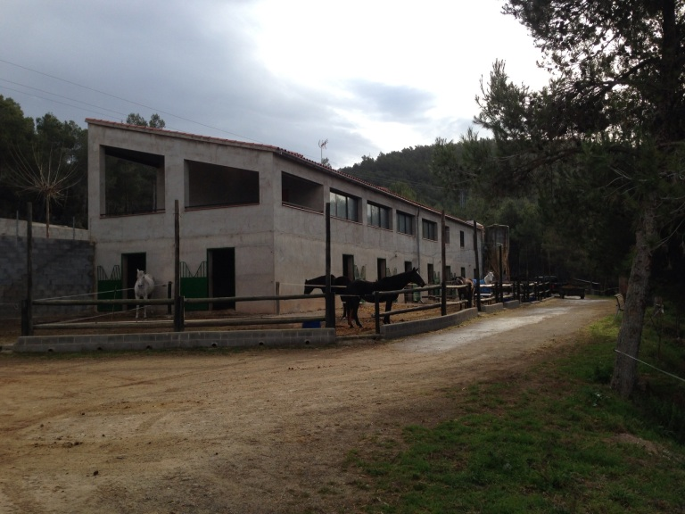 1105 Stables Paddocks 2